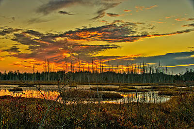 New Jersey Pine Barrens Photograph - An November Sunset In The Pines by Louis Dallara