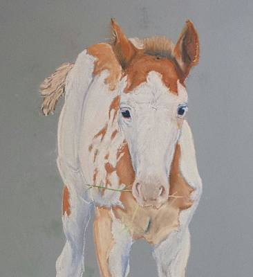 Pinto Drawing - Anak by Sheryl Hare
