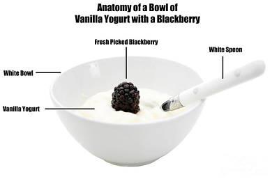 Anatomy Of A Bowl Of Vanilla Yogurt With A Blackberry Original by Michael Ledray