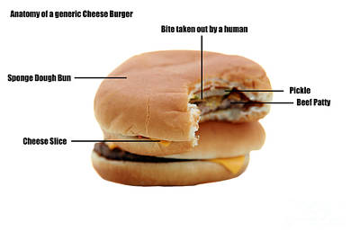 Anatomy Of A Generic Cheese Burger Print by Michael Ledray