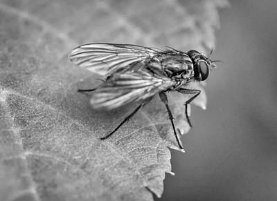 Autumn Photograph - Anatomy Of A Pest - Bw by Steve Harrington