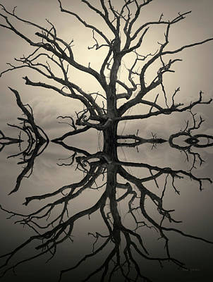 Montage Photograph - Ancient Oak Tree Montage Toned by David Gordon