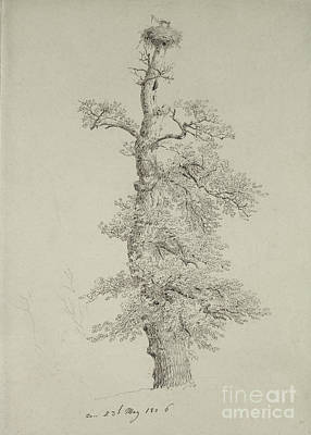 Stork Painting - Ancient Oak Tree With A Storks Nest by Caspar David