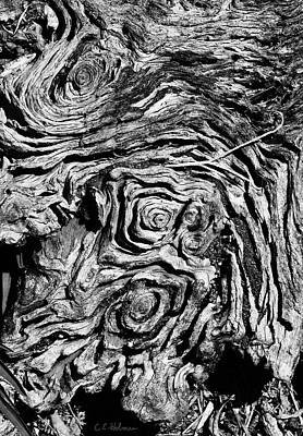 Ancient Stump Print by Christopher Holmes