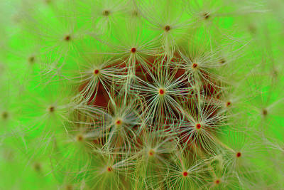 Dandelion Digital Art - And Again About The Dandelion.... by Yuri Hope