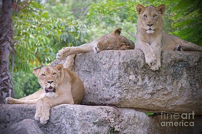 Cats Photograph - And The Living Is Easy by Judy Kay