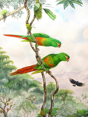 Wildlife Painting - Andean Colors by Robin Schiele