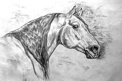 Wild Horses Drawing - Andy by Jana Goode