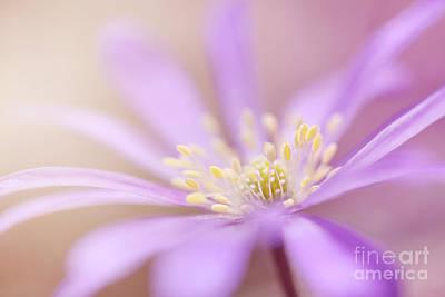 Hjbh Photograph - Anemone Blanda by LHJB Photography