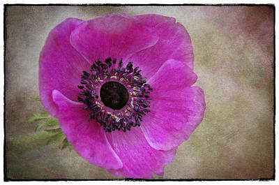 Painterly Photograph - Anemone by Robert Brown