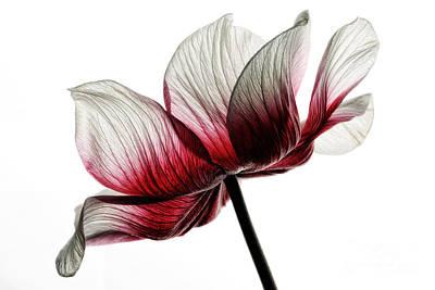 Beauty Mark Photograph - Anemone X by Mark Johnson