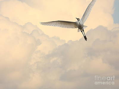 Bif Photograph - Angel In The Sky by Wingsdomain Art and Photography