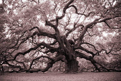 Leaves Photograph - Angel Oak Tree by Dustin K Ryan
