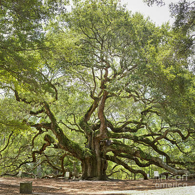 Angel Oak Photograph - Angel Oak Tree Johns Island 64mp by Dustin K Ryan