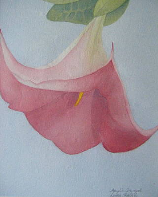 Datura Painting - Angel's Trumpet by Louise Riedell
