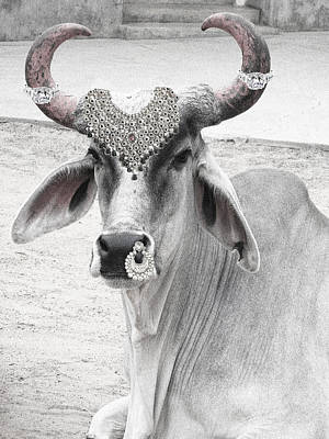 Cow Digital Art - Animal Royalty 6 by Sumit Mehndiratta