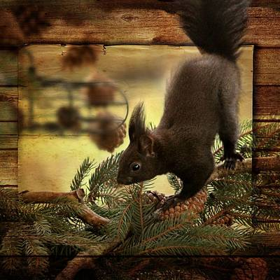 Squirrel Mixed Media - Animallife by Heike Hultsch