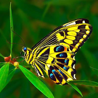 Manipulation Photograph - Anise Swallowtail Butterfly by Bill Caldwell -        ABeautifulSky Photography