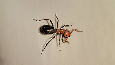Ant Drawing - ant by Gilca Rivera