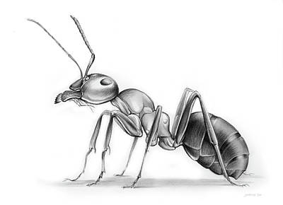 Ant Drawing - Ant by Greg Joens