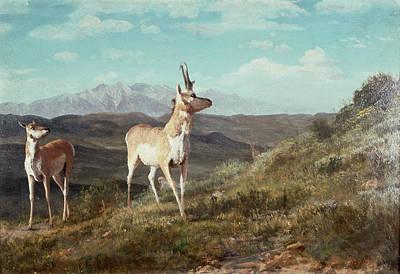 Reindeer Painting - Antelope by Albert Bierstadt