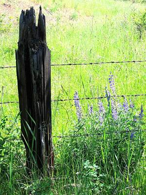 Antique Fence Post Print by Will Borden