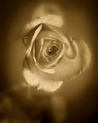 Antique Soft Rose Print by M K  Miller