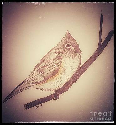 Titmouse Drawing - Antique Titmouse by Ginny Youngblood