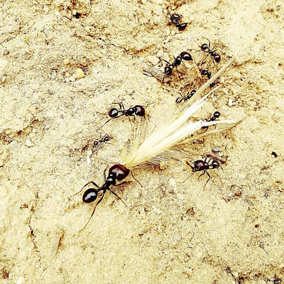 Ants At Work Original by Marco Oliveira