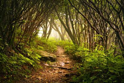Appalachian Hiking Trail - Blue Ridge Mountains Forest Fog Nature Landscape Print by Dave Allen