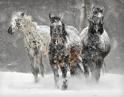 Cold Photograph - Appaloosa Winter by Wade Aiken