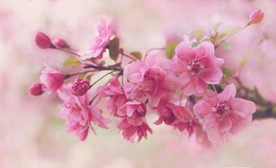Apple Blossom Beauty Print by Jessica Jenney