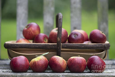 Freckles Photograph - Apple Harvest  by Tim Gainey
