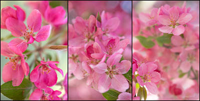 Three Trees Photograph - Apple Tree Triptych 2 by Leland D Howard