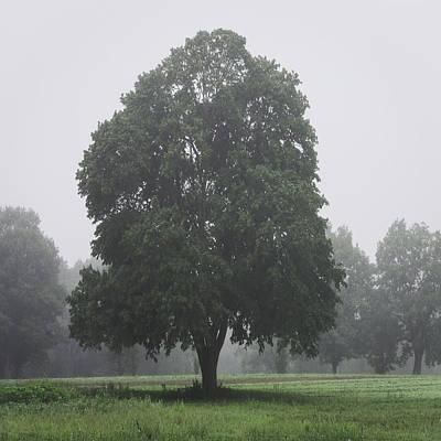 Appleton Photograph - Appleton Tree Rainy Day by David Stone