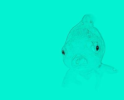 Schizzo Photograph - Aqua Fish by Judy Bernier