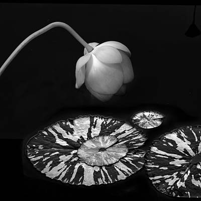 Zen Digital Art - Aquatic Zen by Jessica Jenney