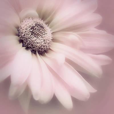 Photograph - Arabesque In Ballet Pink by Darlene Kwiatkowski