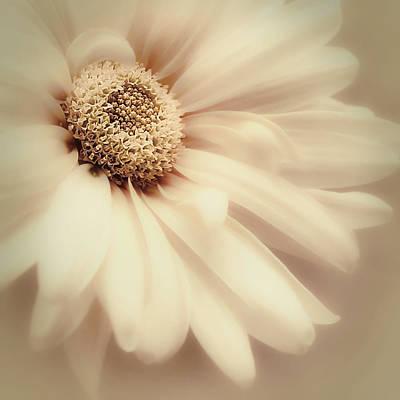 Photograph - Arabesque In Butternut by Darlene Kwiatkowski
