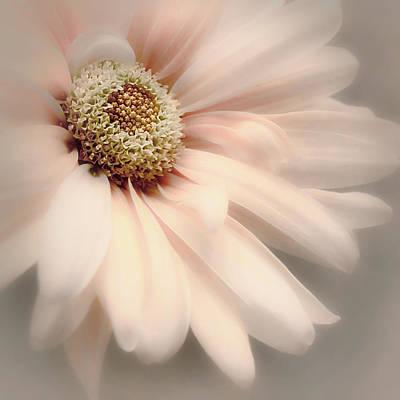 Photograph - Arabesque In Peach Glow by Darlene Kwiatkowski