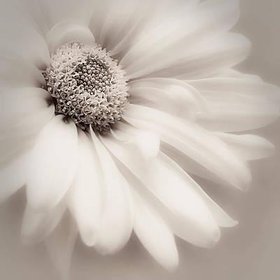 Photograph - Arabesque In Soft Charcoal by Darlene Kwiatkowski
