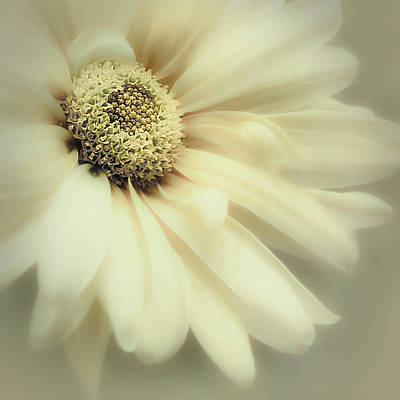 Photograph - Arabesque In Soft Moss by Darlene Kwiatkowski
