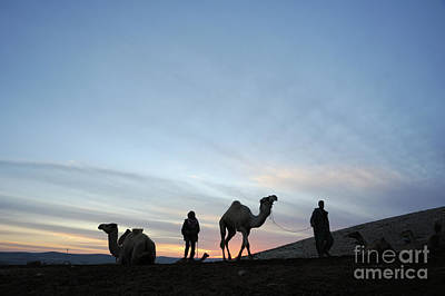 Camel Photograph - Arabian Camel At Sunset by PhotoStock-Israel