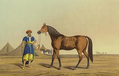 Stallion Drawing - Arabian Horse by Henry Thomas Alken