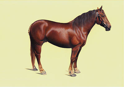 Handmade In Usa Painting - Arabian Horse Realistic Painting, Indian Miniature Watercolor Artwork India. by A K Mundra