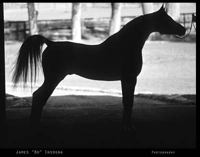 Horse Photograph - Arabian Horse Silhouette Black And White Print by James BO  Insogna