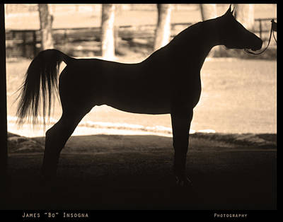 Animal Photograph - Arabian Horse Silhouette Sepia Print by James BO  Insogna