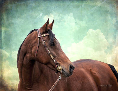 Concho Photograph - Arabian Mare With Headstall by Karen Slagle