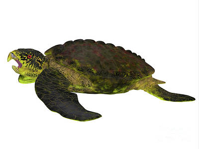 Archelon Turtle Side View Print by Corey Ford