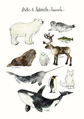 Arctic And Antarctic Animals Print by Amy Hamilton